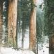 Be a Redwood Bible Reader